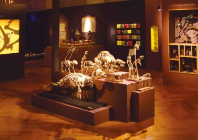 salle1 - musée zoologique de strasbourg