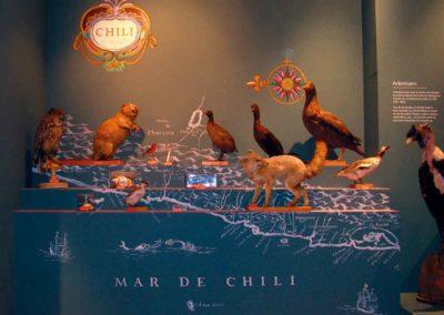 chili - musée zoologique de strasbourg