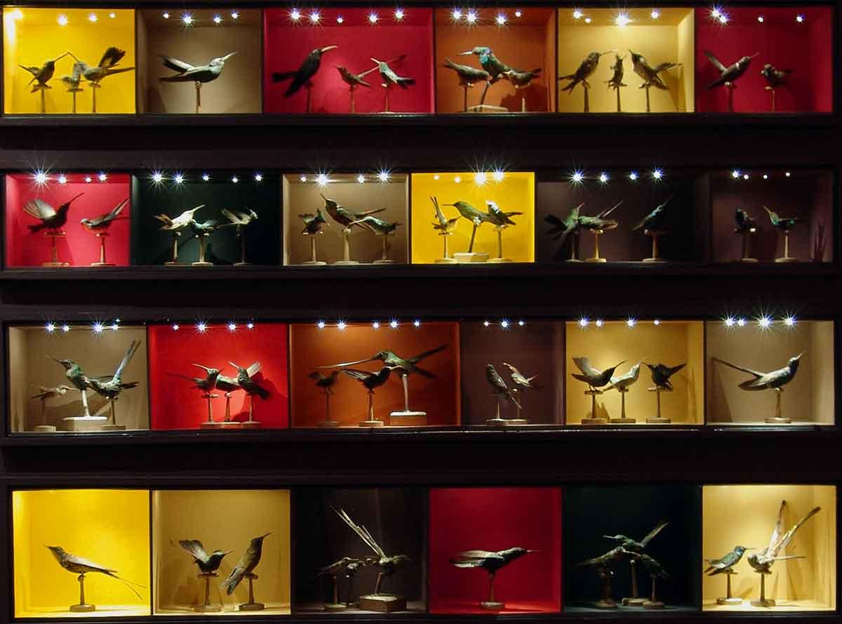 les-colibris - philippe poirer