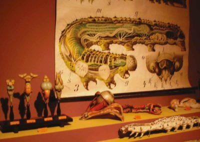 chenille - musée zoologique de strasbourg