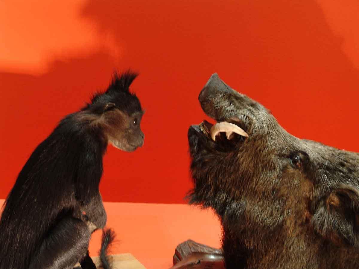 le-singe-et-le-sanglier - philippe poirier