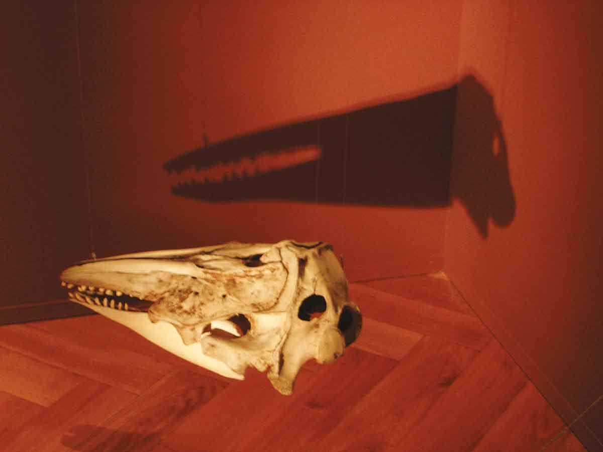 crânes - philippe poirier