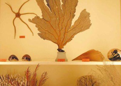 coraux- musée zoologique de strasbourg