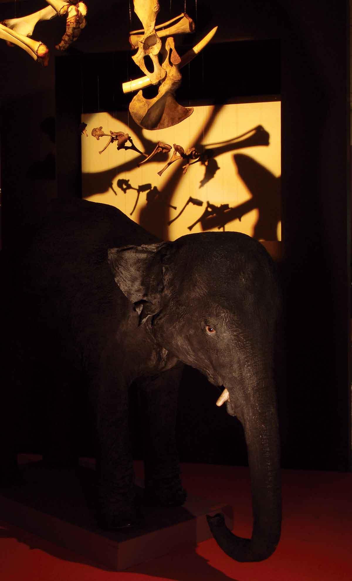 le-rêve-de-l'éléphanteau - phlippe poirier
