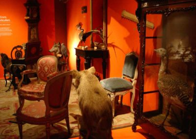 salon - musée zoologique de strasbourg