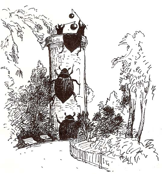 scarabé-tour - la chambre des merveilles - philippe poirier